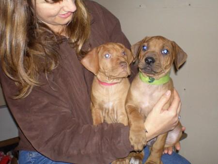 above: puppies @ 7 weeks